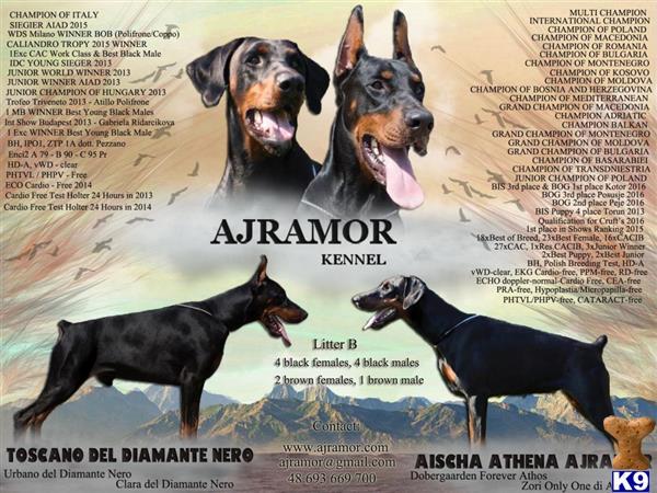 ajramor Picture 1
