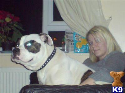 craigsbulldogs Picture 3