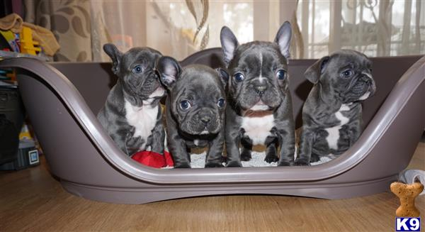 FrenchieLove Picture 2