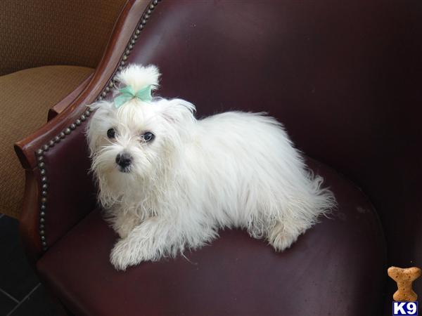 Puppies For Sale In Colorado Springs. Ad - Colorado Springs Dogs