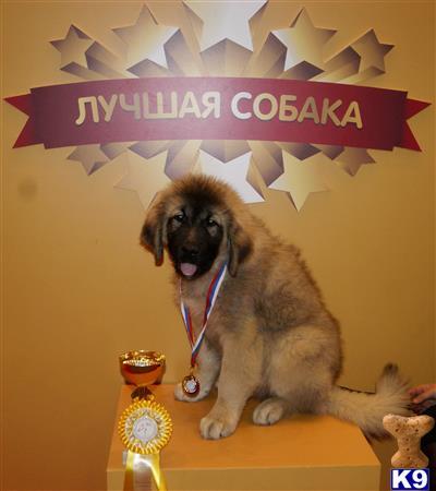 Konstantin Picture 3