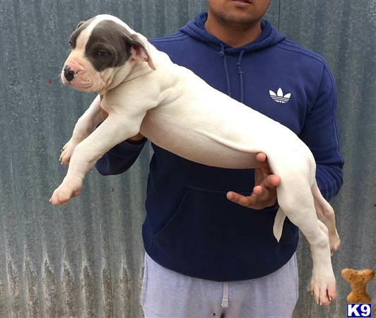 lkkennels Picture 2