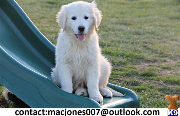 macjones Picture 1