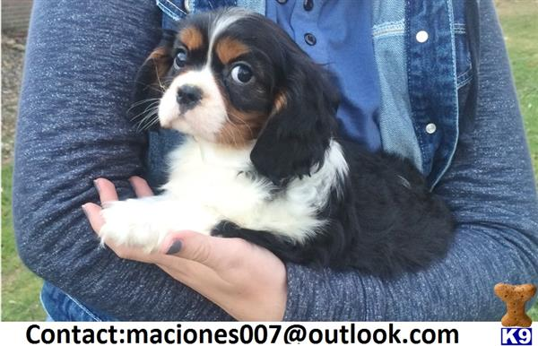 macjones002 Picture 1