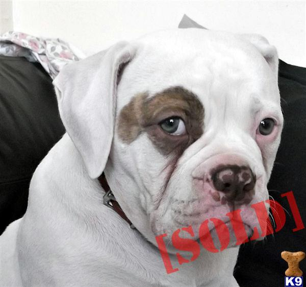 ramstein and big block bullies t price £ 900 images