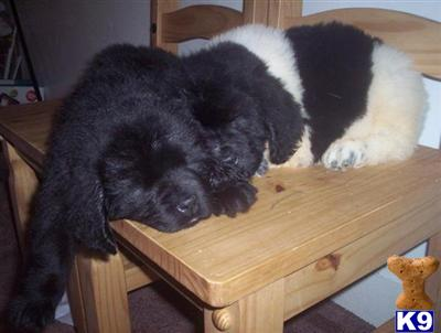 newfie Picture 3