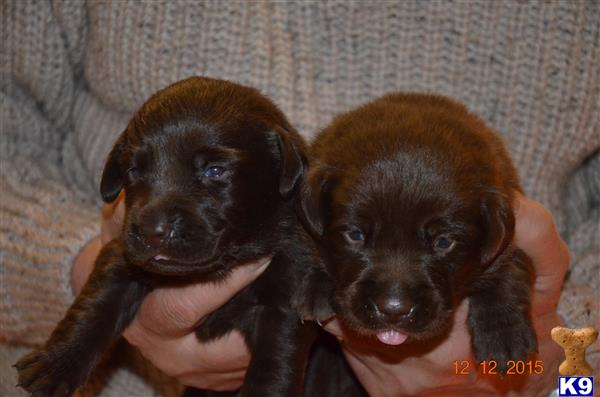 pemkennels Picture 1