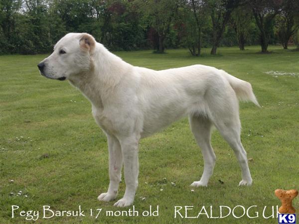 realdog Picture 1