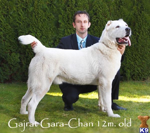 realdog Picture 2