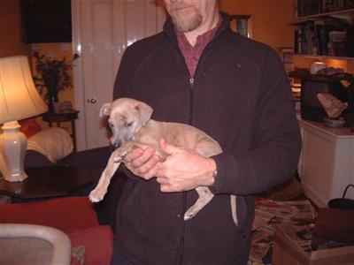 sheawhippets Picture 3