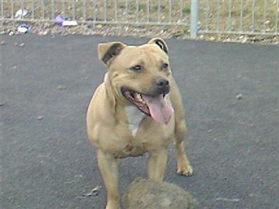stokerstaffies Picture 3
