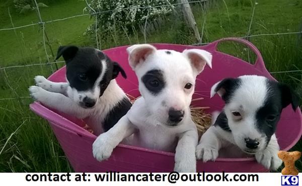 williancater Picture 1